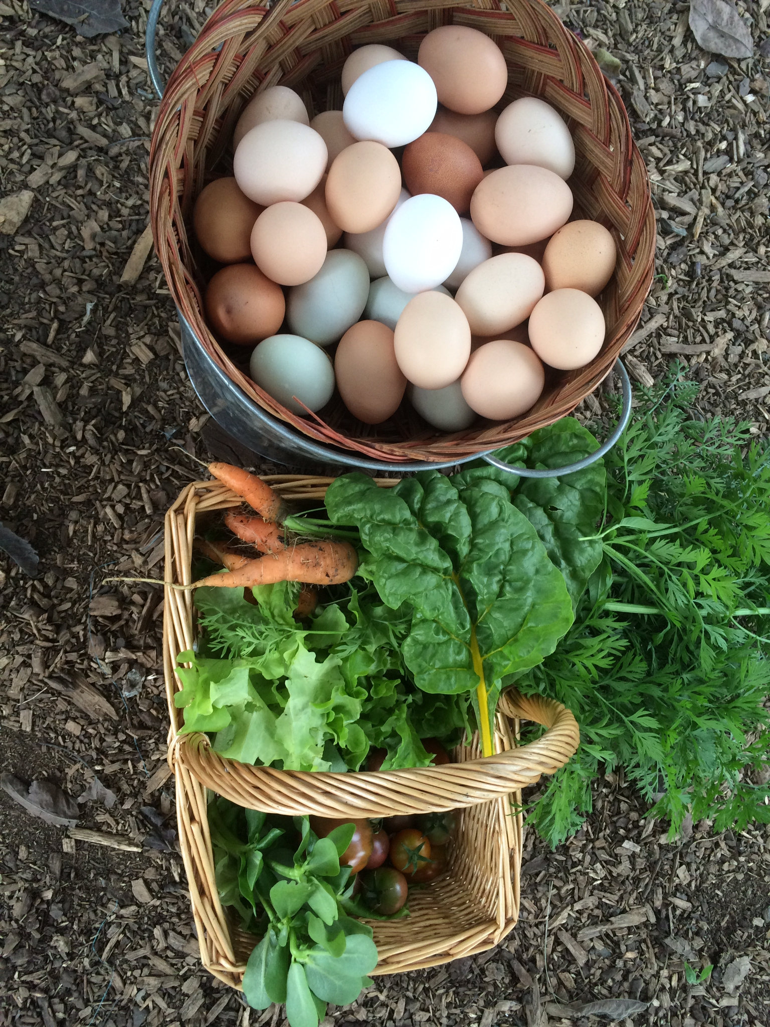Fresh eggs & veggies